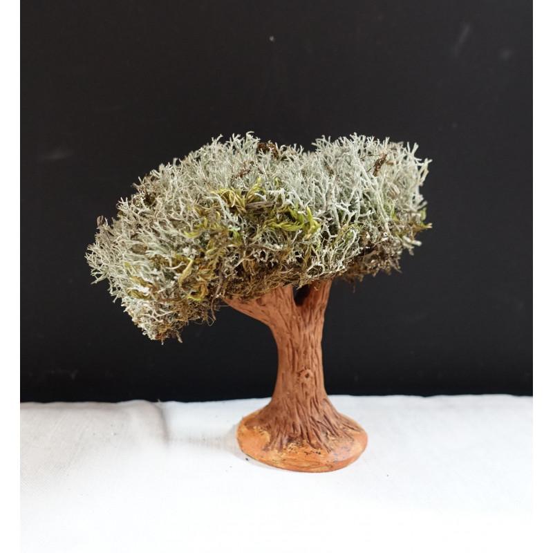 Arbre l'olivier 6/7 cm